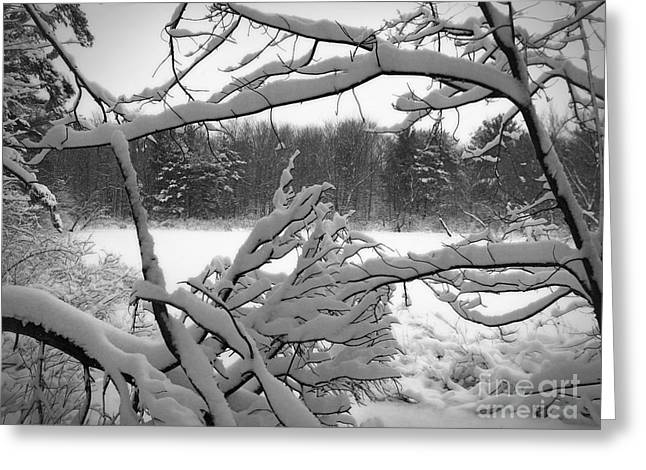 Winter Pond Greeting Card by Kathi Mirto