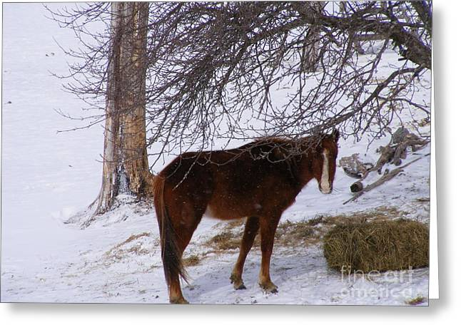 Winter Pony Greeting Card by Susan Russo