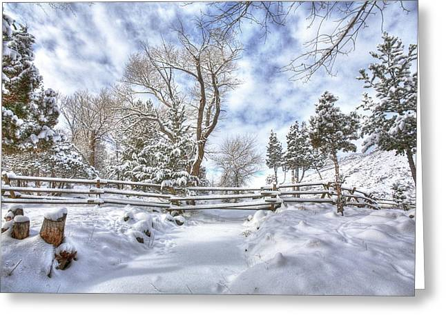 Winter Radiance Greeting Card