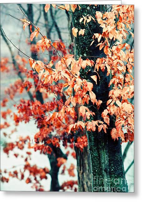 Winter Rain Greeting Card by Kim Fearheiley