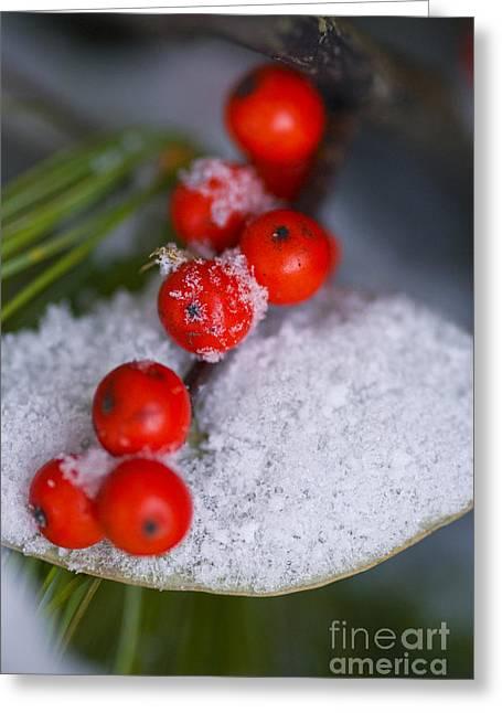 Winter Red Berries Greeting Card by Birgit Tyrrell