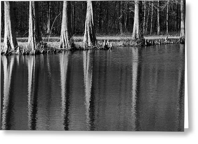 Winter Reflections - Cypress Tree Art Print Greeting Card