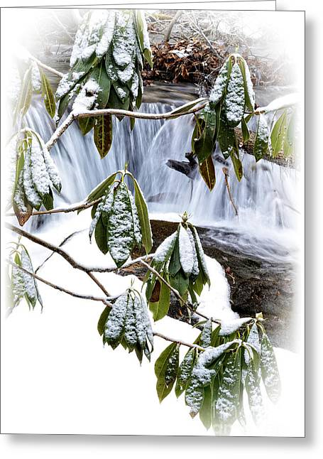Winter Rhododendron And Waterfall Greeting Card