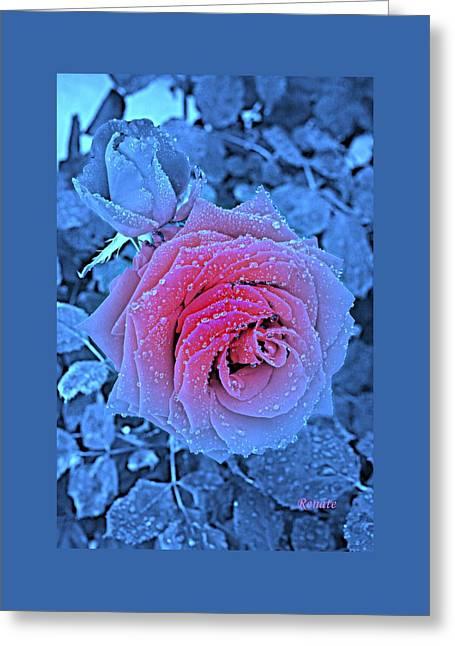 Winter-rose Greeting Card