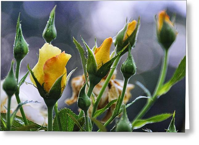 Winter Roses Greeting Card by Jan Amiss Photography