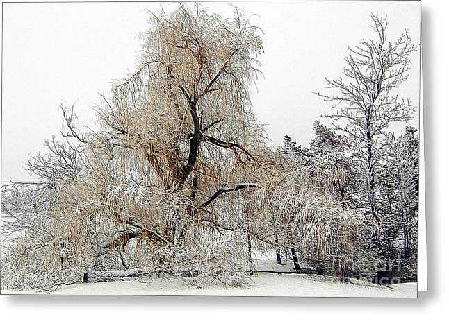 Winter Scene Greeting Card by Kathleen Struckle