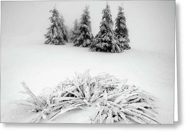 Winter Scenery Greeting Card