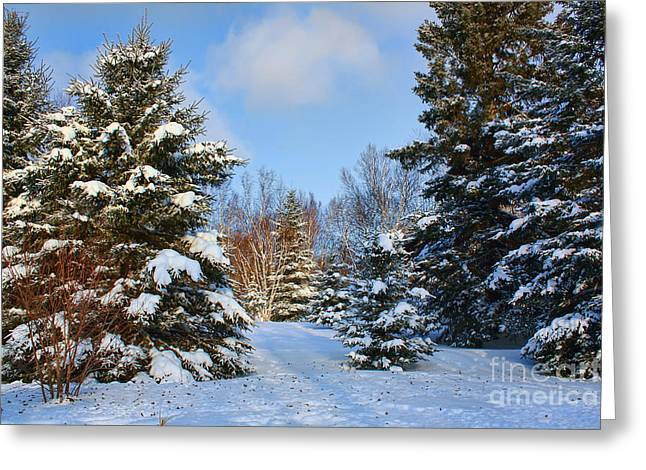 Winter Scenery Greeting Card by Teresa Zieba