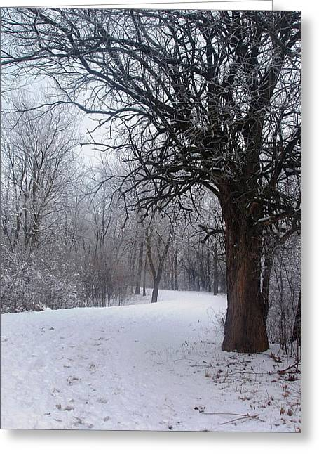 Greeting Card featuring the photograph Winter Serenity by Teresa Schomig
