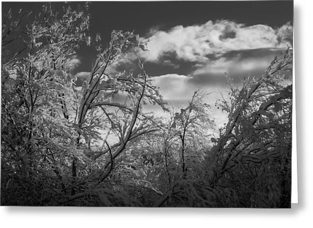 Winter Sky Greeting Card by Frank Mari