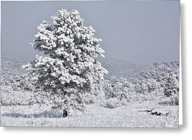 Greeting Card featuring the photograph Winter Solitude by Diane Alexander