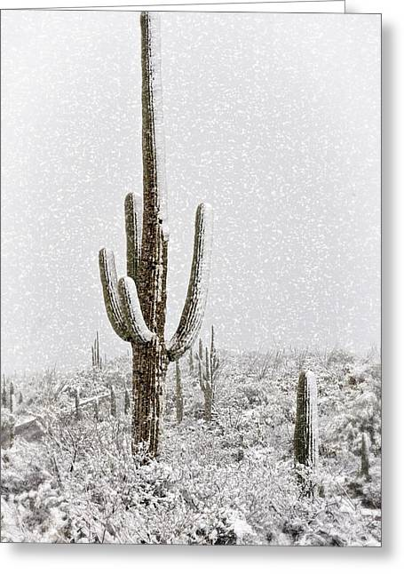 Winter Sonoran Style  Greeting Card