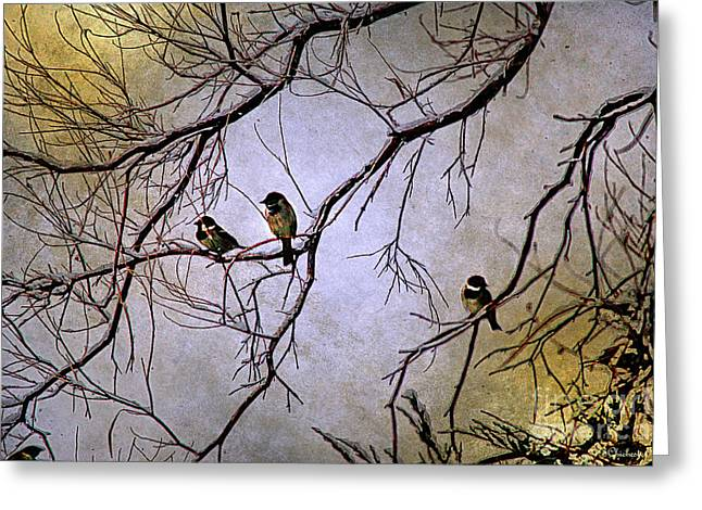 Winter Sparrow Dawn Greeting Card by Barbara Chichester