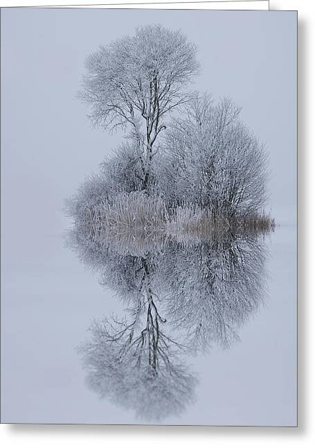 Winter Stillness Greeting Card