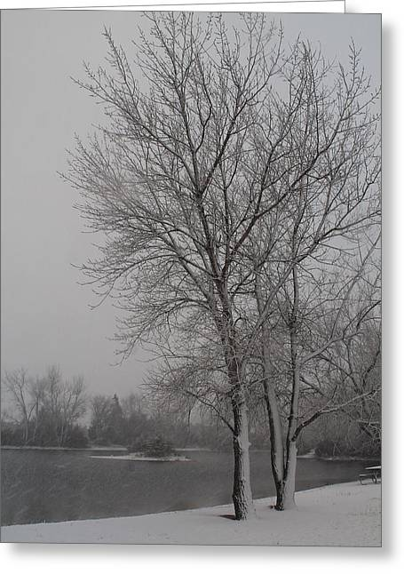 Winter Storm Greeting Card by Alicia Knust