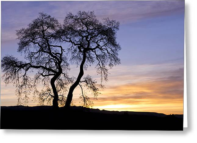 Winter Sunrise With Tree Silhouette Greeting Card by Priya Ghose