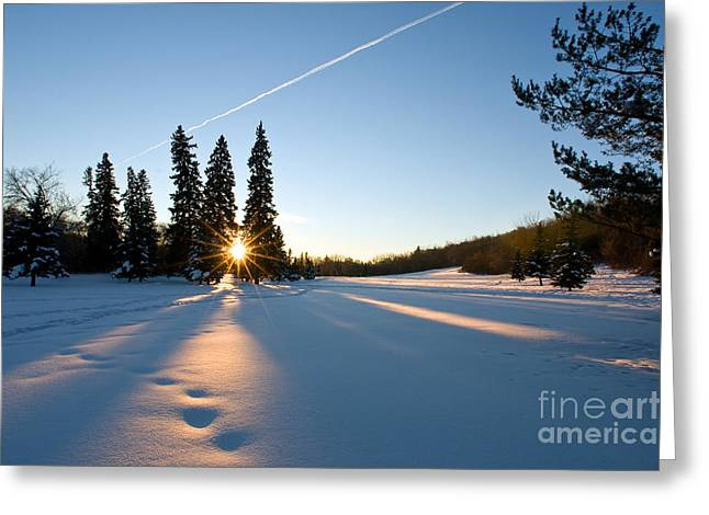 Winter Sunset Greeting Card by Terry Elniski