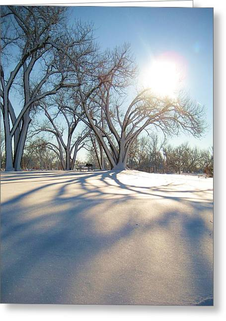 Winter Sunshine Greeting Card by Alicia Knust