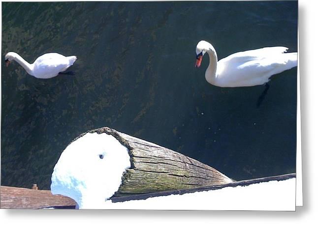 Winter Swans Greeting Card by Rakesh Babwah