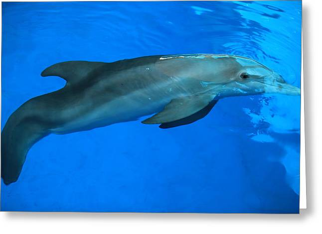 Winter The Dolphin Greeting Card by Doug McPherson