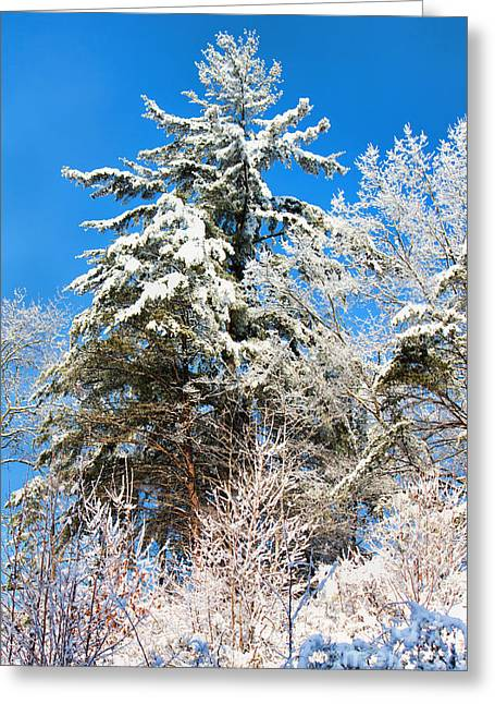 Winter Time Greeting Card by Lena Auxier