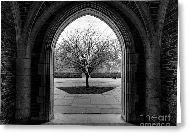 Winter Tree At Duke University Greeting Card by Emily Kay