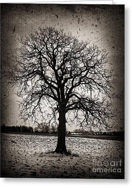 Winter Tree Greeting Card