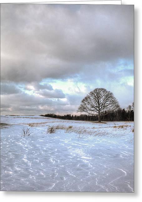 Winter Tree Greeting Card by Steve Gravano