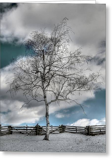 Winter Tree Greeting Card by Todd Hostetter