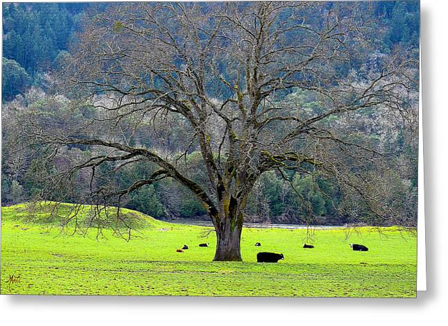 Winter Tree With Cows By The Umpqua River Greeting Card