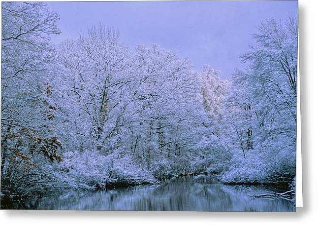 Winter Trees Greeting Card by Carolyn Smith