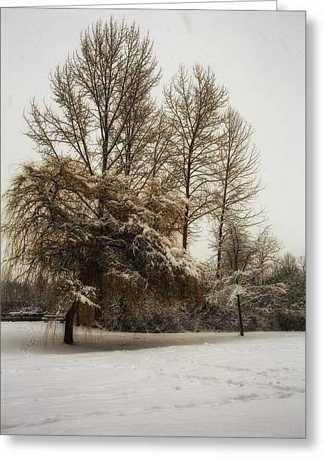 Winter Trees Greeting Card by Eti Reid
