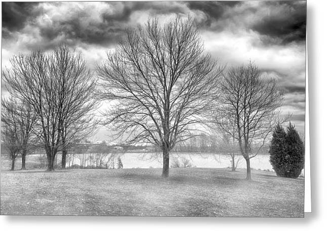 Winter Trees Greeting Card by Howard Salmon