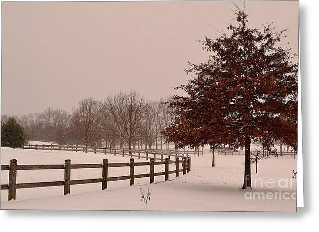 Winter Trees In Park Greeting Card