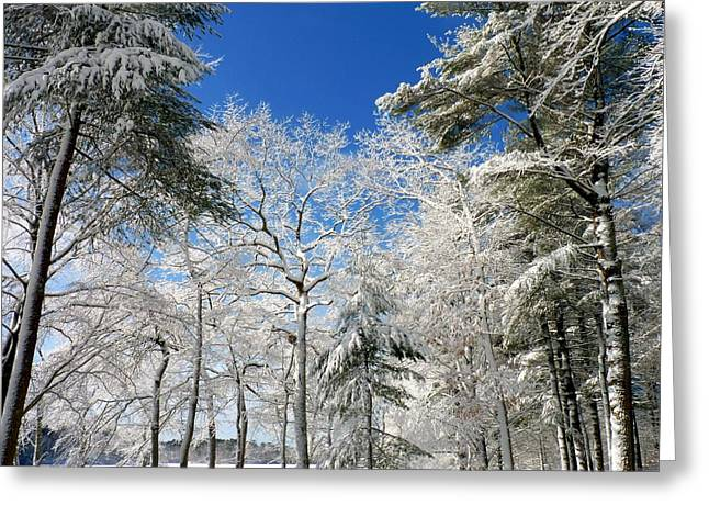 Greeting Card featuring the photograph Winter Trees by Janice Drew