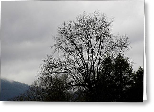 Winter Trees Number Four Greeting Card by Paula Tohline Calhoun