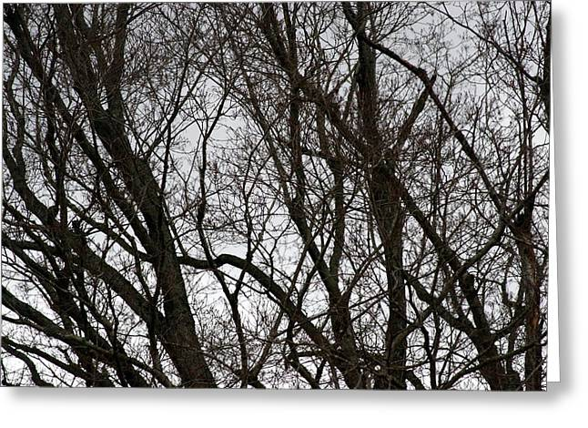 Winter Trees Number One Greeting Card by Paula Tohline Calhoun