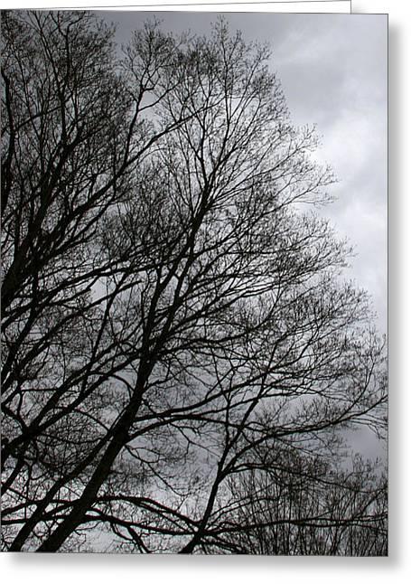 Winter Trees Number Three Greeting Card by Paula Tohline Calhoun