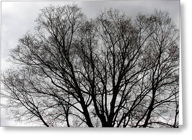 Winter Trees Number Two Greeting Card by Paula Tohline Calhoun
