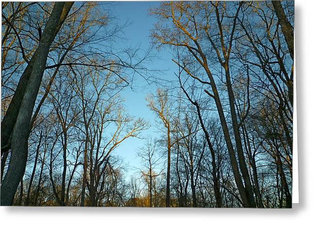 Winter Trees Greeting Card by Pete Trenholm