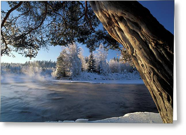 Winter Trees River Sweden Greeting Card