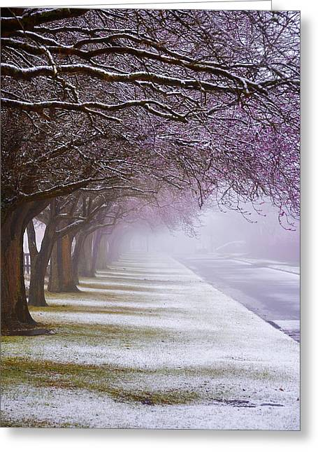 Winter Trees Greeting Card by Svetlana Sewell