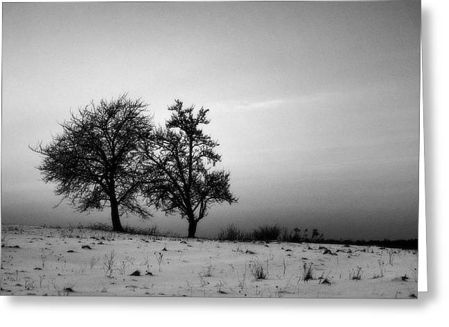 Winter Trees Greeting Card by Tomasz Dziubinski