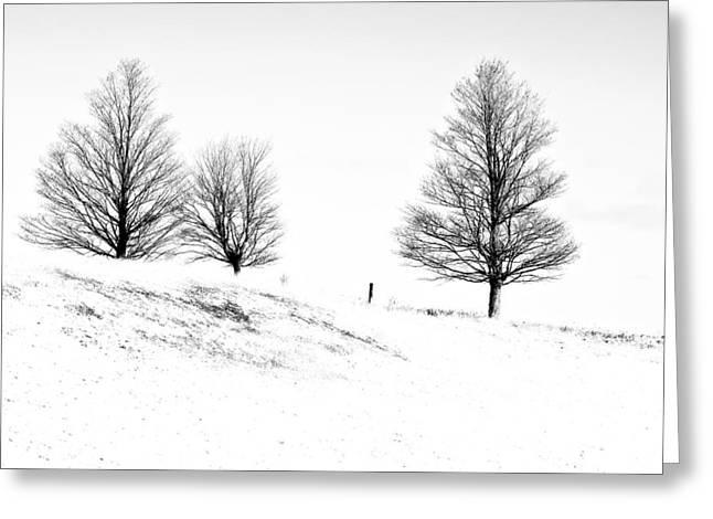 Winter Trinity Infrared Greeting Card by Steve Harrington