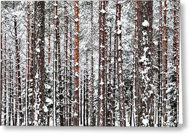 Greeting Card featuring the photograph Winter Trunks by Kennerth and Birgitta Kullman