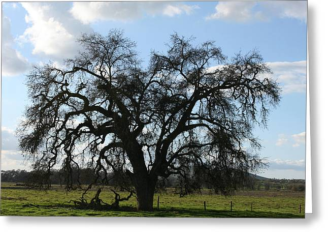 Winter Valley Oak Greeting Card
