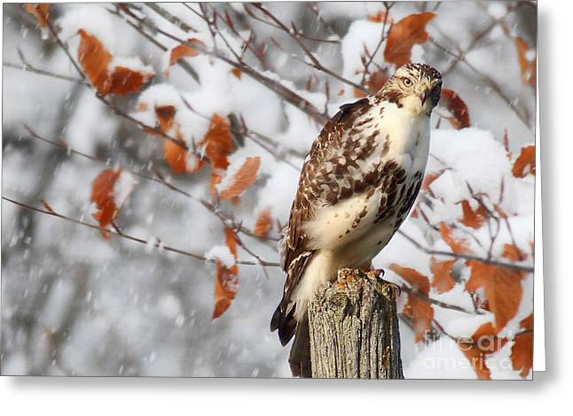 Winter Visitor  Greeting Card