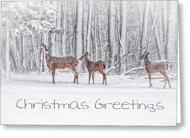 Winter Visits Card Greeting Card