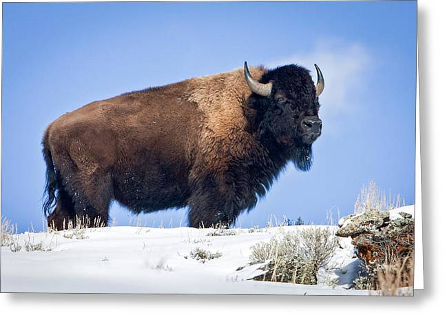 Greeting Card featuring the photograph Winter Warrior by Jack Bell