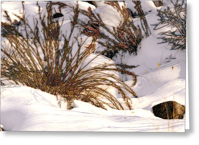Winter Weeds Greeting Card by Kae Cheatham